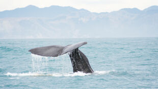 Jak wieloryb walczy z globalnym ociepleniem