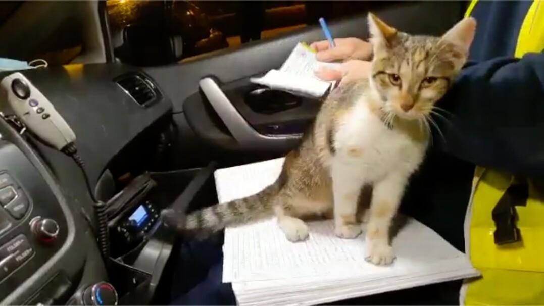 """""""Do radiowozu wtargnęła kotka"""". Dzisiaj chyba mandatów nie będzie"""