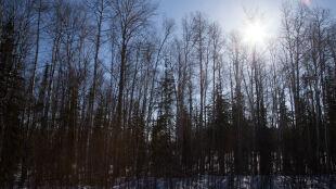 Prognoza pogody na dziś:  pogodnie, tylko miejscami śnieg