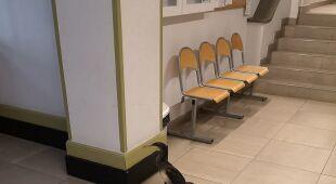 Niecodzienny pacjent w przychodni (Straż Miejska w Gdańsku)