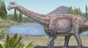 Odkryto szczątki nowego gatunku dinozaura